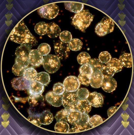 nanopiramides-de-oro-son-los-puntos-colo